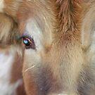 Soft eyes by dwilk