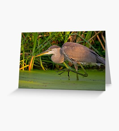 Getting a leg up on the competition Greeting Card