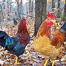 Ozark Wild Chickens RIP by NatureGreeting Cards ©ccwri