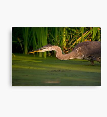 Spring Loaded Canvas Print