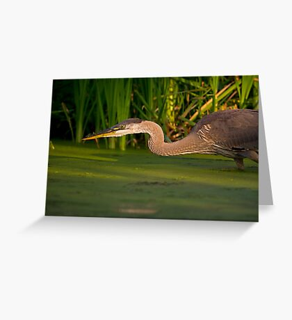 Spring Loaded Greeting Card