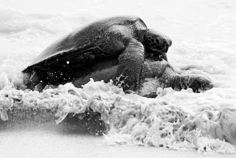 Not Drowning, Mating B&W by Jane McDougall