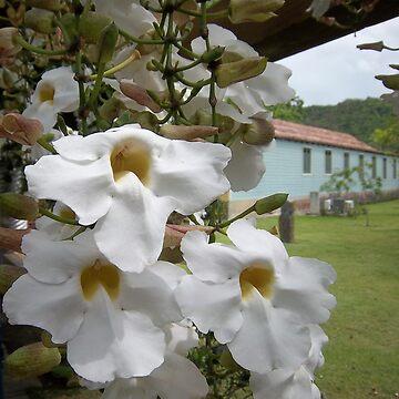 Meet me where the White Flowers Grow by kotoro