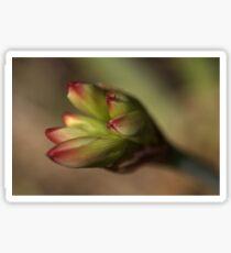 Belladonna Lily Sticker