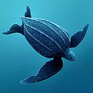 Leatherback Sea Turtle by Tami Wicinas