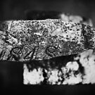 Fragment of the Past by utilityimage