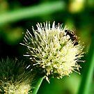 Bee & onion by Bluesrose