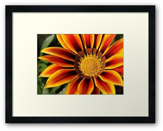Bill's Flower by Ray Clarke