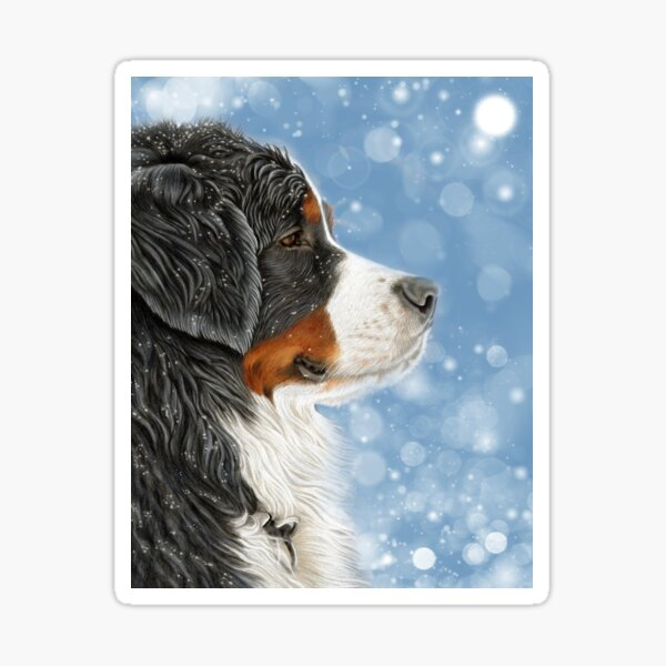 Bernese - Let it Snow - Frosty Blue Sticker