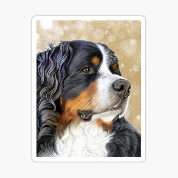 Bernese Mountain Dog - Old Gold Sticker
