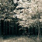 The Summer Lane  by MLabuda