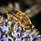 Pollination 12 by Gareth Jones