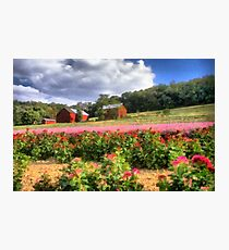 Country side flowers Photographic Print