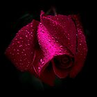A Rose For Rosemarie by Len Bomba