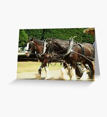 Shire Horses Greeting Card