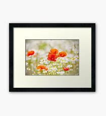Poppy in the Field of Daisies Framed Print
