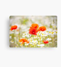 Poppy in the Field of Daisies Canvas Print