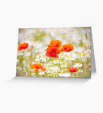 Poppy in the Field of Daisies Greeting Card