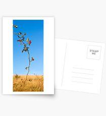Brier Branch Postcards