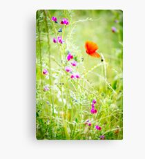 Poppies and Sweet Peas Canvas Print