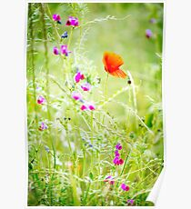 Poppies and Sweet Peas Poster