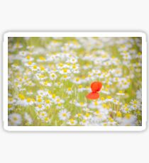 Field of Daisies and the Lonely Poppy Sticker