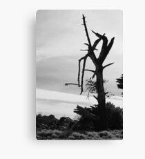 Desolation - Mornington Canvas Print