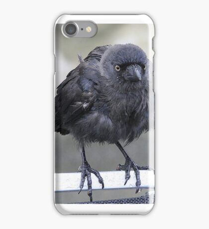 ...wet birds of a feather... iPhone Case/Skin