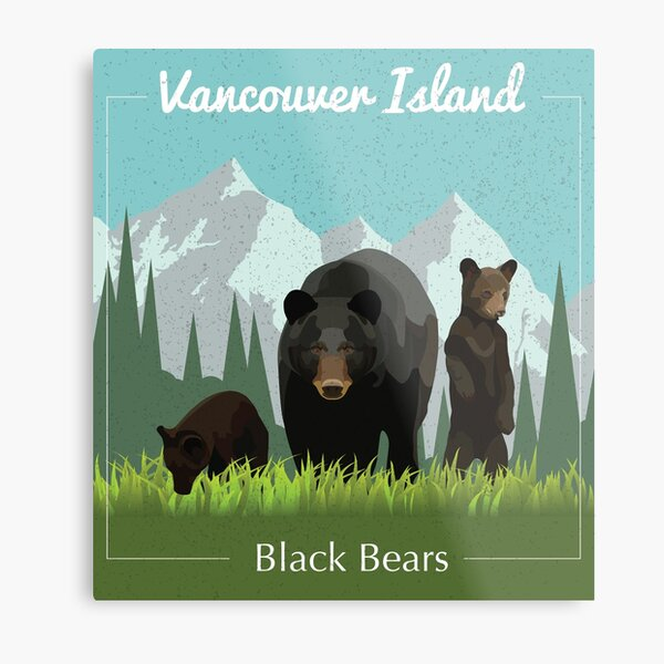 Vancouver Island Black Bear Illustration Metal Print