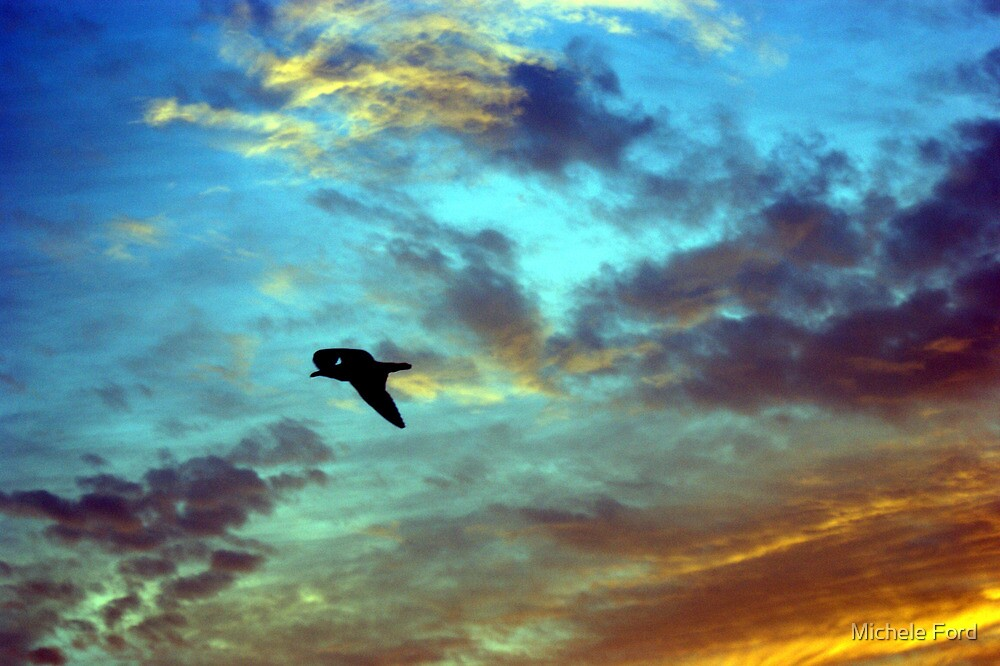 A Bird Above Belmar by Michele Ford