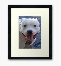 Pit Bull Pretty Framed Print