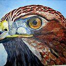 Red Tailed Hawk by Pauline Jones