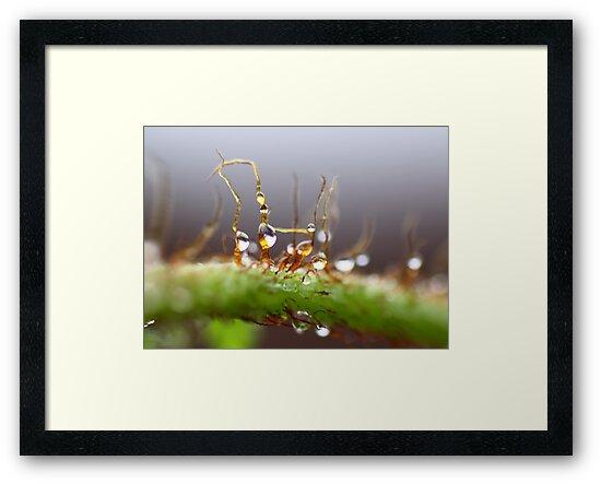 Dewdrops on Fern by yolanda