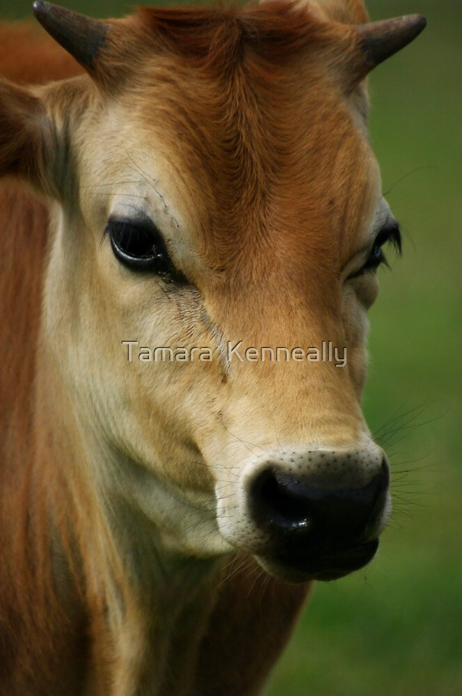 Handsome Hansel by Tamara  Kenneally