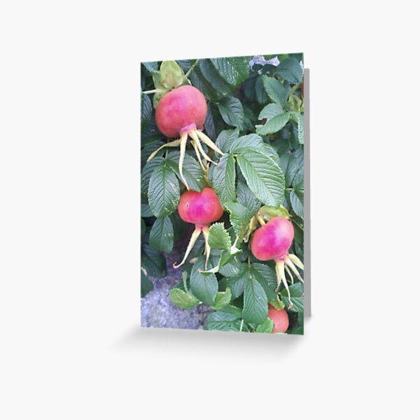 Beach Plums on Peaks Island, Maine Greeting Card