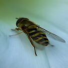 Hoverfly by Trevor Kersley