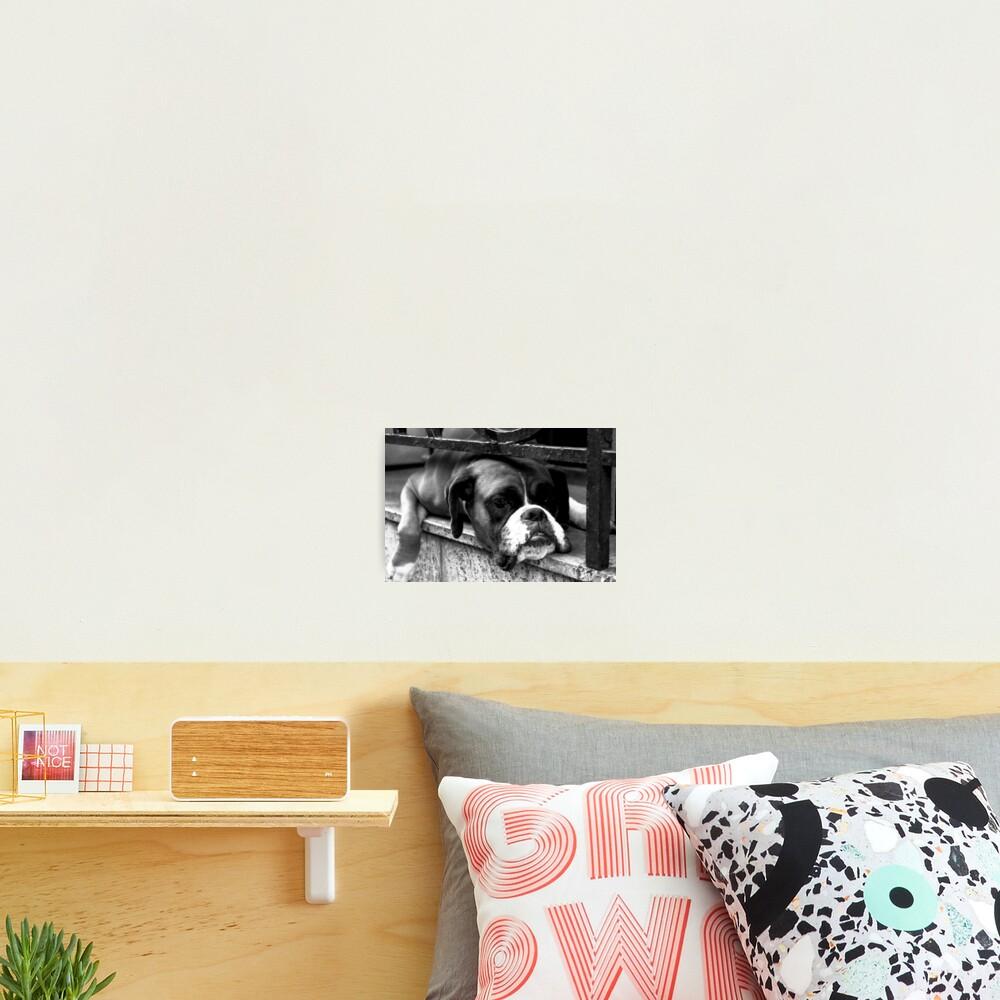 Boxer Dog On Windowsill Photographic Print