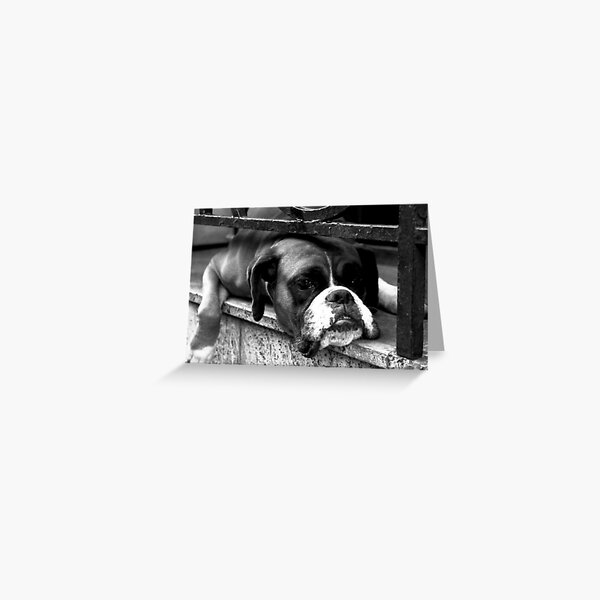 Boxer Dog On Windowsill Greeting Card