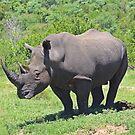 White Rhino by ScalesNPO