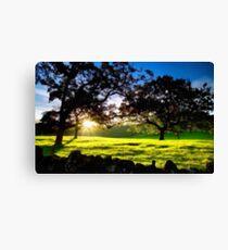Good morning trees Canvas Print