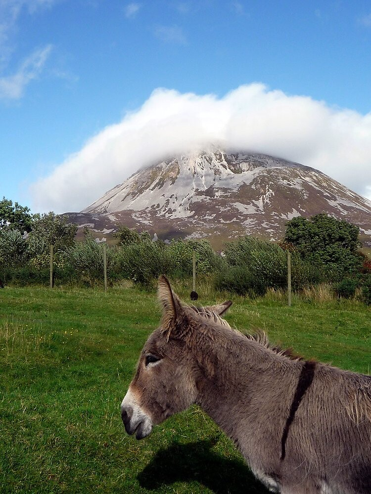 Donkey at Mt Errigal by Esther  Moliné
