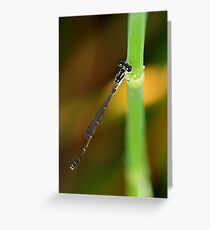 Fragile Fortktail Greeting Card