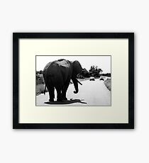 Playing Chicken With An Elephant Framed Print