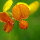 Orange Tongue by TriciaDanby