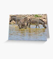 Zebra - Living a Colorful Life Greeting Card