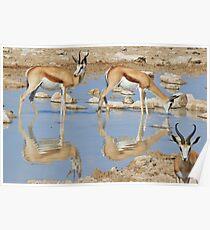 Springbok Antelope - Iconic Wildlife from the Desert Poster