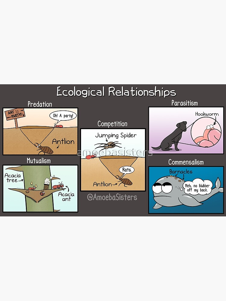 Ecological Relationships by amoebasisters