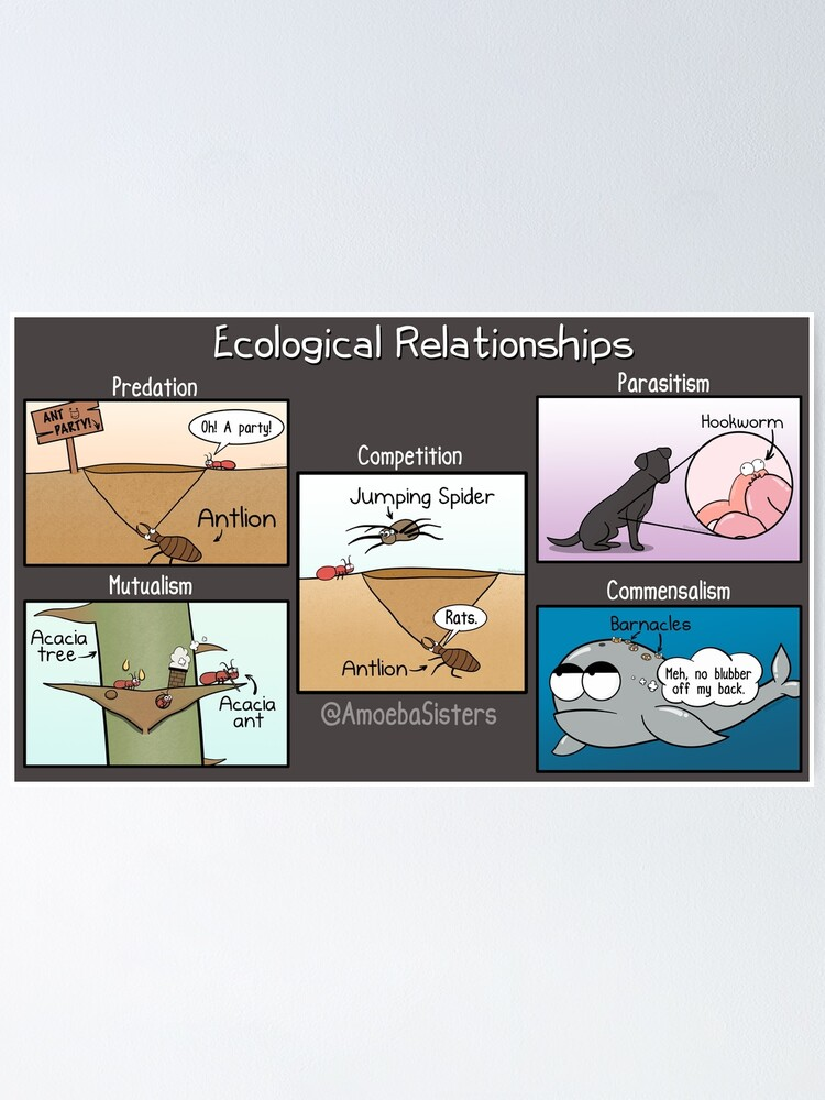 Alternate view of Ecological Relationships Poster