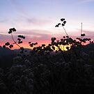 Angeles National Forest Sunset by Jennifer  Gaillard