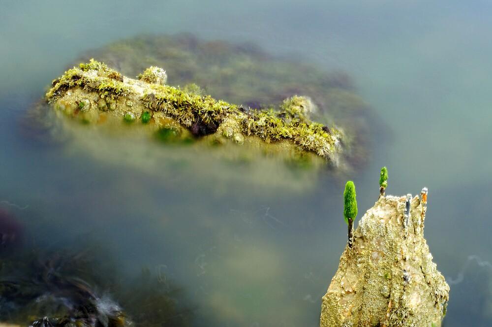 Marine Life on Exposed Concrete Debris by Rod Johnson